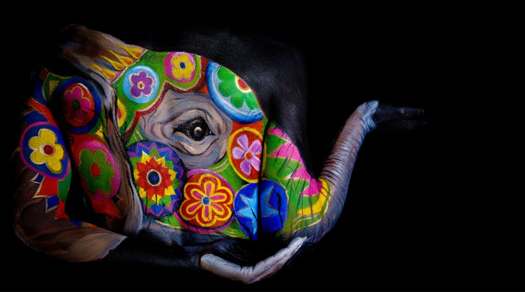 Mandala painted elephant part of the fine art fauna series