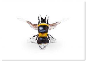 Bee A2 Landscape Print