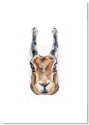 Yoga Black Naped Hare