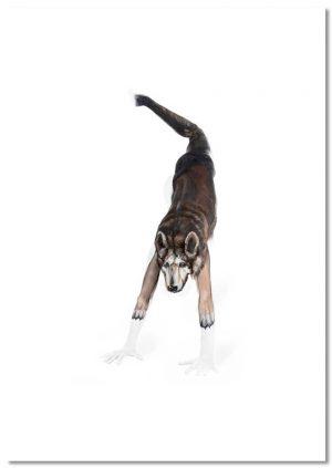 Yoga Downward dog