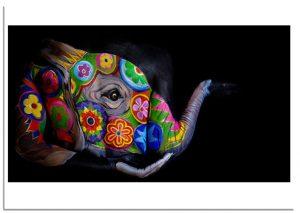 Mandala elephant origins