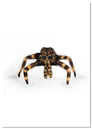 Marvels of Nature Tarantula print